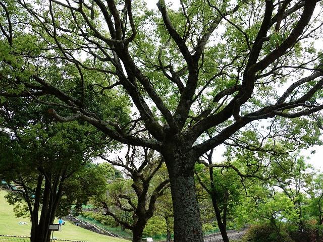この木 なんの木
